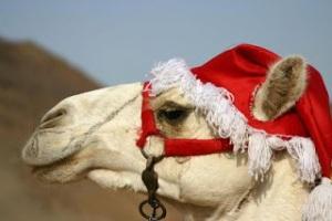 christmas-camel